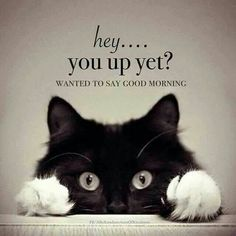 Good Morning Quotes, Funny Good Morning Wishes, Inspirational Morning Quotes With Images Funny Good Morning Memes, Good Morning Quotes For Him, Good Morning Beautiful Quotes, Morning Inspirational Quotes, Good Morning Messages, Morning Humor, Good Night Quotes, Good Morning Wishes, Good Morning Cat