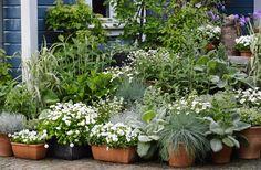 En Ydmyg Have: Hvidt i godt selskab
