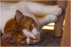 Relaxing Ramses the cat