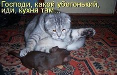 New Quotes Cute Cats Ideas Funny Animal Pictures, Dog Pictures, Funny Photos, Funny Animals, Funny Babies, Funny Kids, Kitten Tattoo, Super Cat, Funny Christmas Cards