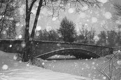 Winter Photography: A White Escape