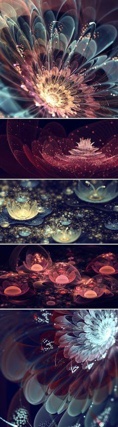 Fractal flowers by Silvia Cordedda // digital art // floral art