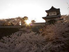 Cherry blossom Festival Kyoto, Japan