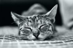 .The real measure of a day's heat is the length of a sleeping cat. Charles J. Brady