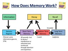 Produced this lesson to use with my year in preparation for their exams. Looks at different memory games to get them thinking about how their memory w. Memory Psychology, Psychology Notes, Cognitive Psychology, Gcse Exams, Gcse Revision, Games To Improve Memory, Memory Games, Project Life Organization, Study Organization