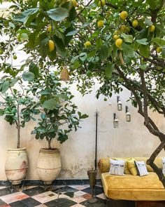 """El Fenn Hotel Marrakech on Instagram: """"If you've never picked a lemon warm from a tree & smelled it then we suggest you hop to it and jump on a plane right now. Tis the season."""""""