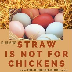 mine love fresh wheat straw days but this makes me rethink it. Might switch to sand. 10 Reasons Straw is Not for Chickens Laying Chickens, Raising Backyard Chickens, Keeping Chickens, Pet Chickens, Urban Chickens, Laying Hens, Backyard Farming, Diy Chicken Coop Plans, Portable Chicken Coop