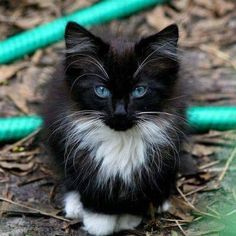 Beautiful fur baby with gorgeous eyes❤