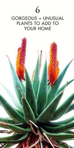 Kent andreasen plants flora and flowers 6 gorgeous unusual plants to add to your plant stash indoor gardenindoor workwithnaturefo