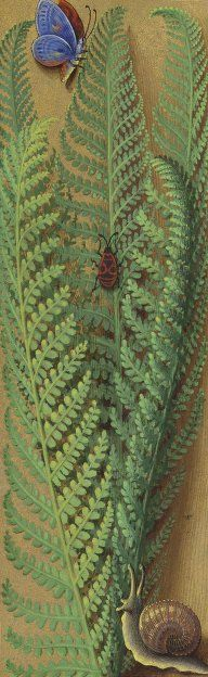 green - fern with insects - Floral border from the Grandes Heures d'Anne de Bretagne, illuminated by Jean Bourdichon
