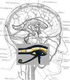 Pineal Gland: Portal of Higher Dimensions   RiseEarth
