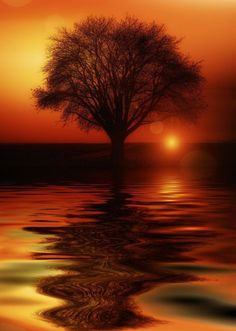 Free Illustration: Tree, Mirroring, Water, High Water - Free Image on Pixabay - 117587 Beautiful Sunset, Beautiful World, Beautiful Images, Beautiful Morning, All Nature, Belle Photo, Beautiful Landscapes, Cool Pictures, Nature Photography