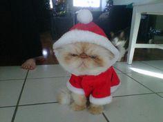 Ho.. ho ...ho.. (pwahahahaha)