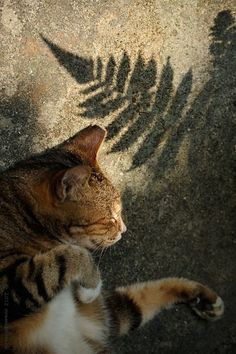 Cats in Hong Kong by Micros Yip on 500px