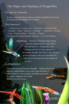 Dragonfly Digital Art - Magic And Mystery Of Dragonflies by Lisa Redfern Dragonfly Meaning Spiritual, Dragonfly Symbolism, Dragonfly Quotes, Dragonfly Tattoo Design, Dragonfly Art, Dragonfly Images, Tattoo Designs, Dragonfly Necklace, Animal Spirit Guides
