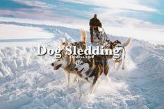 Bucket List   Go Dog Sledding