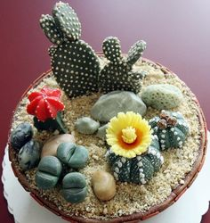 Cactus's - I cant believe this is a cake!!!