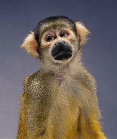 teenager monkey