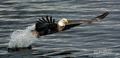 Recently an internal survey in my blog revealed that photographing birds in flight is the most sought after topic. It didn't come as a surprise though, because that's the specialty of birds. They defy gravity and rise up into the sky. How wonderful it is! Here I have listed 10 surefire tips that will help …