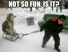 Not so fun, is it ???? #DogHumor #FunnyDog #SillyDog #DogPics #DogMemes #Rawco