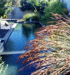 Indigenous flowers and garden ideas on pinterest for Water wise garden designs south africa