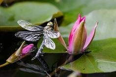 Attract wildlife to your garden pond - Features: Wildlife - gardenersworld.com