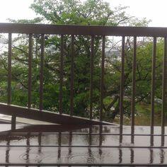 おはようございます小雨模様の水曜日です #goodmorning #おはよう