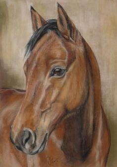 """Pferdezeichnung / Pferdeportrait in Pastell """"Dario"""" Horse painting / Horse portrait in pastel Jutta Pallasch PASTELLBLICKE ~ TIERPORTRAITS"""