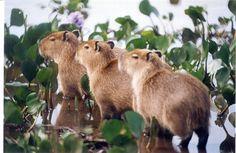 www.litoralbrasilimoveis.com.br-DISCOVER THE BRAZIL: Our beautiful Pantanal!!