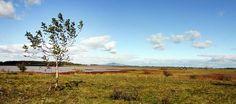 Szikes tó Tiszavasvári előtt...