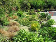 WSHG.NET | Rain Garden Mentors | Featured, The Garden | August 26, 2016…