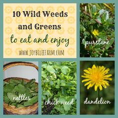 10 Wild Weeds and Greens to Eat | Joybilee Farm