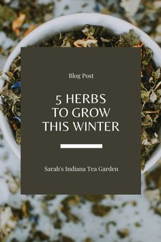 The winter can become so dark and dreary. Growing herbs can add freshness, and a bit of green to your home even on the coldest of days. This post covers my 5 favorite herbs to grow during the winter. Indoor herb gardening | Herb gardening in the winter | Herb gardening indoors | Herbs to grow in the winter | Herbs to grow on a windowsill | Container herb gardening | Growing herbs in containers | Growing chives | Growing parsley | Growing basil | Growing mint | Growing cilantro Parsley Growing, Basil Growing, Growing Herbs At Home, Growing Mint, Growing Seeds, Herb Gardening, Container Gardening, Flora Farms, Farming Ideas