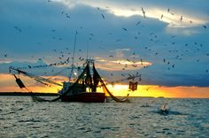 We watched a shrimp boat, nets out and all, approach the sunset with birds diving to get the fish off the boat.  Now that was beautiful and a rare sight indeed, but just as I grabbed my camera, dolphins began jumping out of the water following after the boat.
