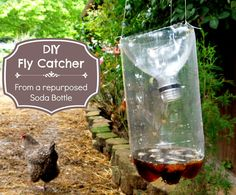 Got Flies ? Make This Easy DIY Fly Catcher out of a Soda Bottle