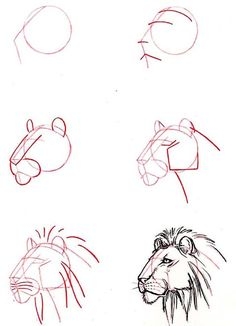 Dibujar cabeza de león