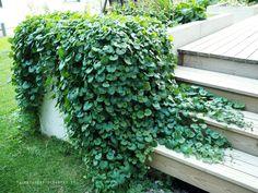 Pergola With Ceiling Fan Pergola Patio, Pergola Ideas, Garden Inspiration, Garden Plants, Perennials, Terrace, Outdoor Living, Garden Design, Yard