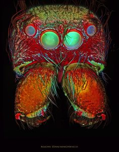 Aliens Among Us: Almost psychedelic microscopic photography of beetles, mites, spiders and moths Micro Photography, Insect Photography, Moth Drawing, Microscopic Photography, Jumping Spider, Moth Caterpillar, Macro And Micro, Things Under A Microscope, Insect Art