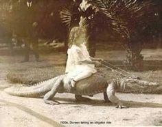 """""""Eh, ça te dit une virée sur mon crocodile ?"""" #NeonMag"""