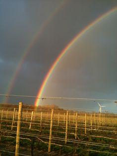 Double Rainbow- 2011 Wines, Vineyard, Rainbow, Outdoor, Outdoors, Rainbows, Rain Bow, Outdoor Games, Outdoor Living