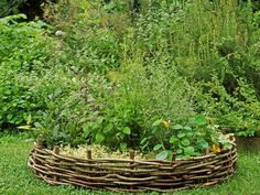 Potager Herb Garden - Groups of symmetrically arranged raised beds provide an easy and attractive way to cultivate a wide range of herbs.