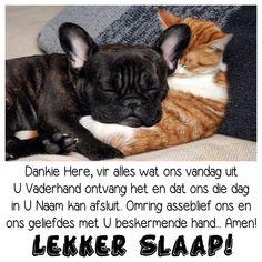 Good Night, Good Morning, Goeie Nag, Afrikaans, Amen, French Bulldog, Animals, Sayings, Beautiful