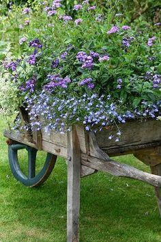 (1) From: Flowerz Gardenz, please visit