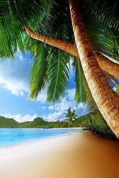 Need a Chair under that Palm Tree !
