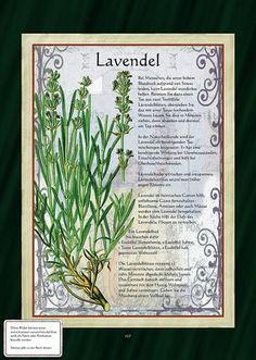 Lavendel > Tähkälaventeli (Lavandula angustifolia)