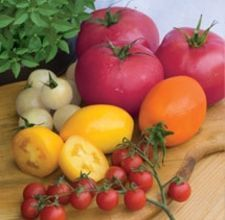 Basics Of Growing new Tomatoes from Heirlooms - Growing your own tomatoes from seed tips