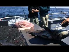 fastest.MP4 if you think you can fillet fish fast check this - YouTube