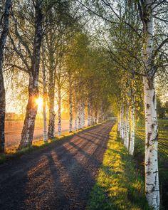 Summer Fresh, Fresh Green, Winding Road, Four Seasons, Amazing Nature, Wonderful Places, Green Leaves, Finland, Sunrise