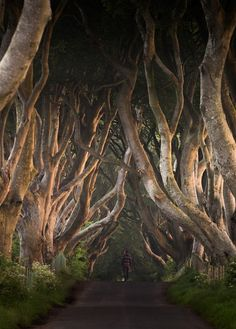 The Dark Hedges in Northern Ireland has been around since the eighteenth century. It is a filming location in the TV show Game of Thrones.