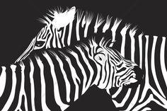 Zebras - Wall Mural & Photo Wallpaper - Photowall